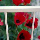 Balcony,poppies by Vivi Kalomiri