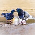 Two Doves by flashcompact
