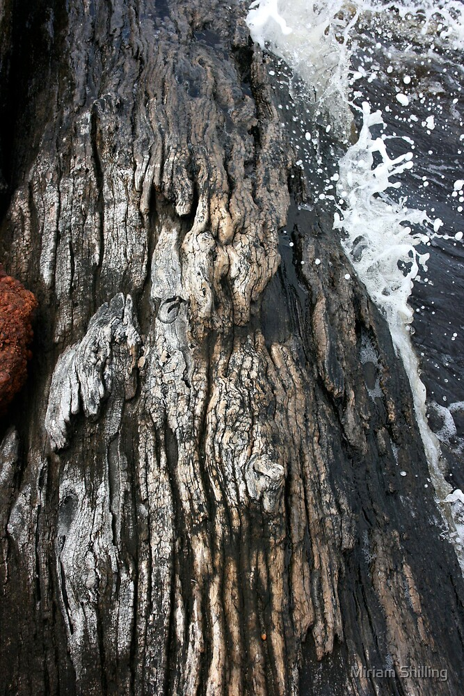 Weathered by water by Miriam Shilling
