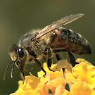 Bee VII by Tom Newman