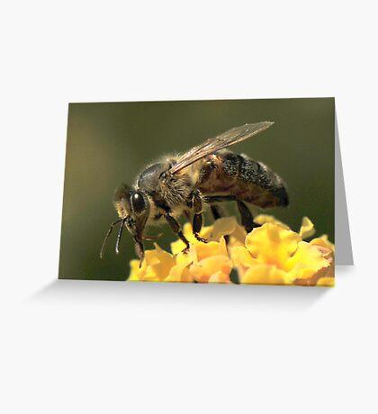 Bee VII Greeting Card