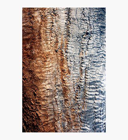 Tree Skin 2 Photographic Print