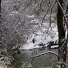 Down by the Creek..... after tthe snow.... by Larry Llewellyn