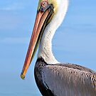 Ready For My Close Up by Dawne Dunton
