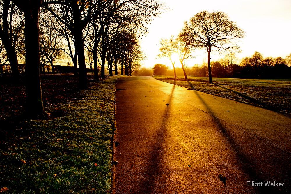 Autumn Light by Elliott Walker