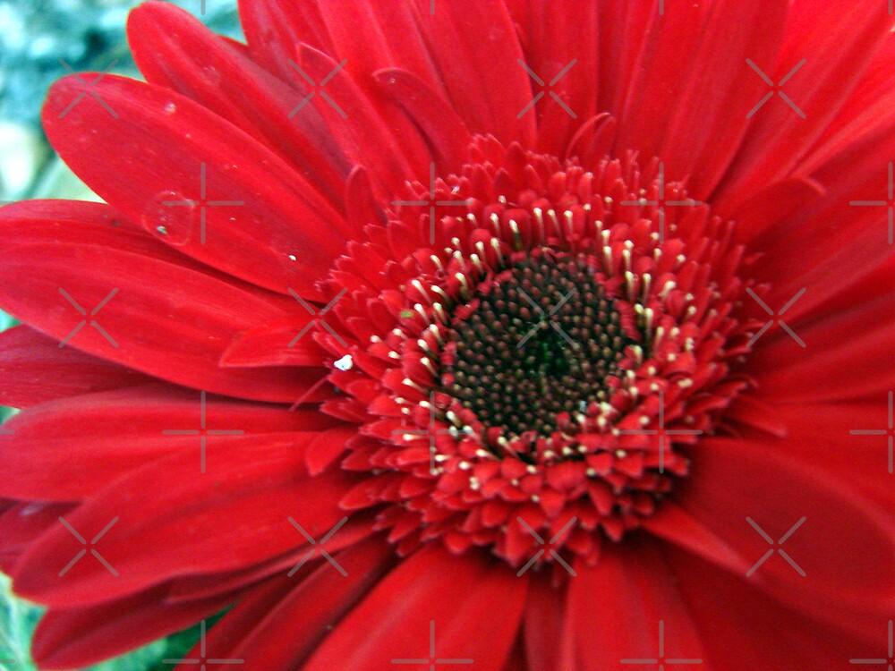 Winter Flower by Kimberly Miller