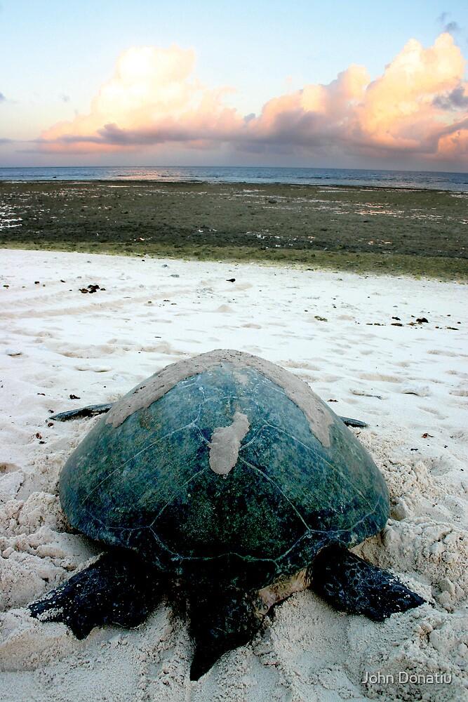 A Turtles Journey by John Donatiu