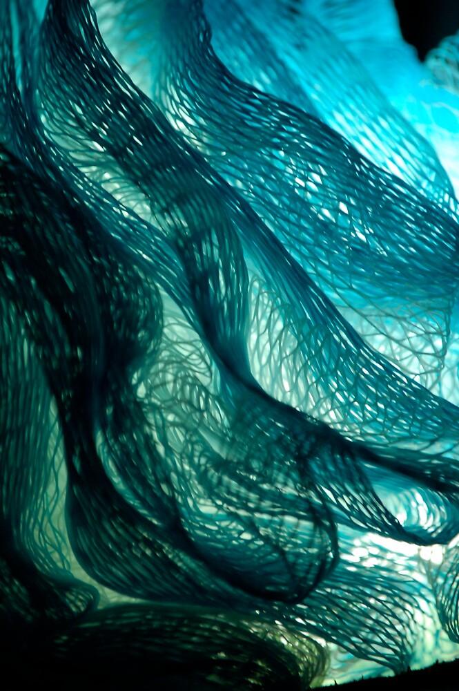 Web of Wonder by Brooke Triplett