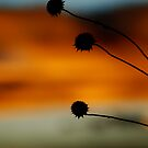 Orange Sunset by Pamela Hubbard