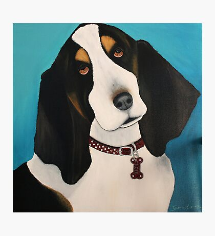 basset Photographic Print