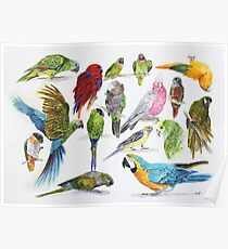 Lots of colorful parrots Poster