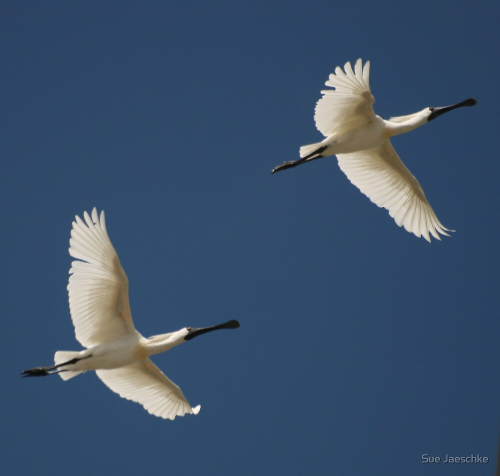 Coming in for Landing.. by Sue Jaeschke