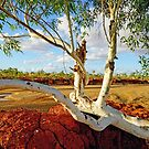 Outback Gum by Harry Oldmeadow