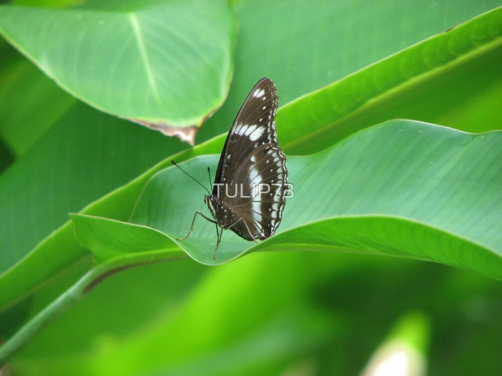 Beauty that flies  by TULIP73