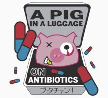 PIG IN A LUGGAGE ON ANTIBIOTICS