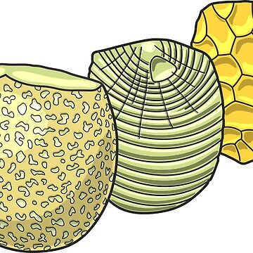 Lithics Knaping Illustration by taylorcustom