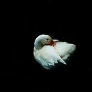 White Duck by oddoutlet