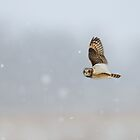 Short Eared Owl In The Snow Storm by Heather King