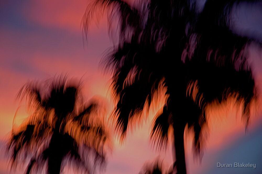 Palms by Duran Blakeley