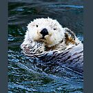 Otterly blissful by Dave  Knowles