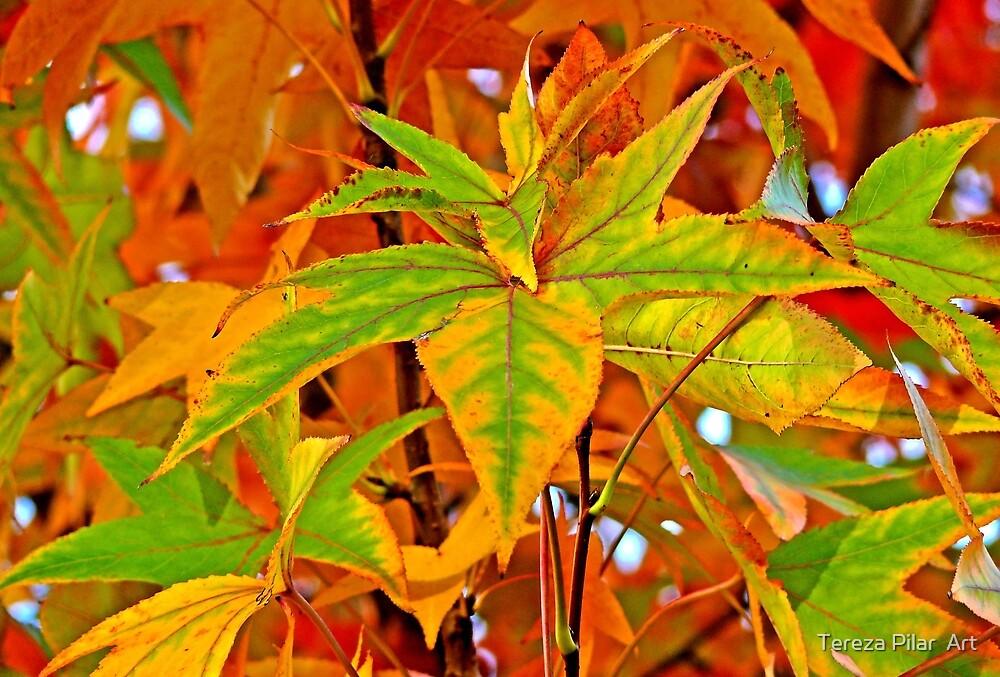 Autumn outono fall by terezadelpilar ~ art & architecture