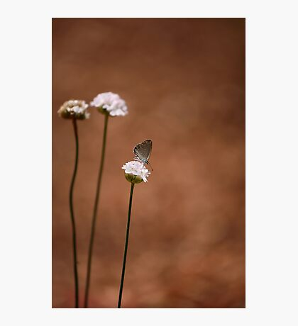 Simple Life Photographic Print