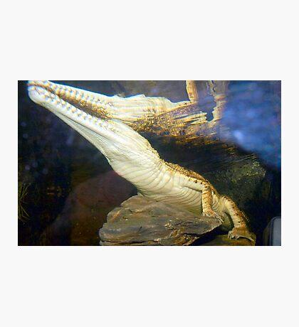 Reptilian Reflection Photographic Print