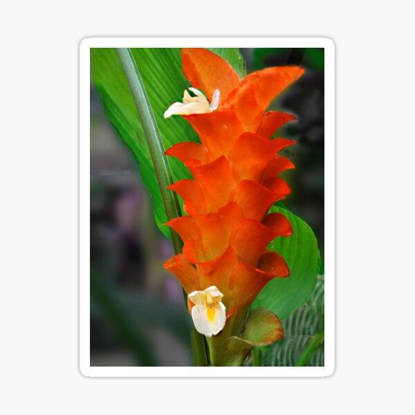Orange Ginger Flower Sticker