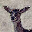 deer by lucyliu