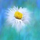 Daisy Daisy by Catherine Hamilton-Veal  ©