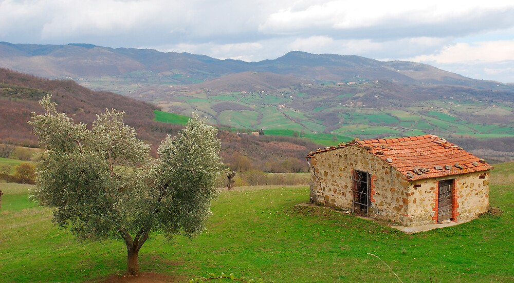 Olive Tree and Old Hut in Tuscany  by jojobob