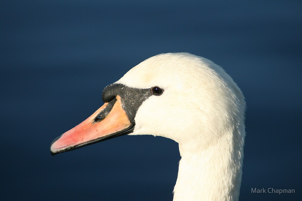 I'm not such an ugly duckling! by Mark Chapman