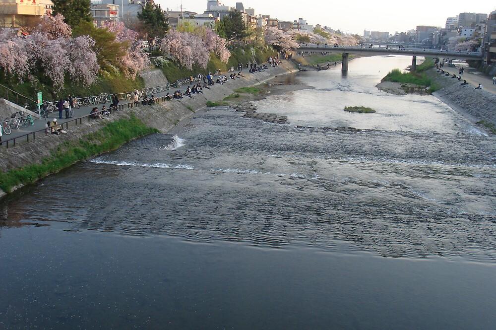 Kamo River in Kyoto, Shijyo Kawaramachi by yukina