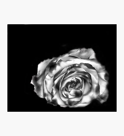 Dream Rose in B&W Photographic Print