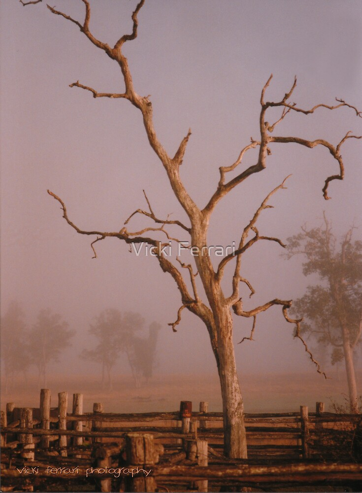 Misty Dawn In the Yards at Oakdale Queensland © Vicki Ferrari Photography by Vicki Ferrari