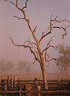 Misty Dawn In the Yards at Oakdale Queensland © Vicki Ferrari Photography by Vicki Ferrari