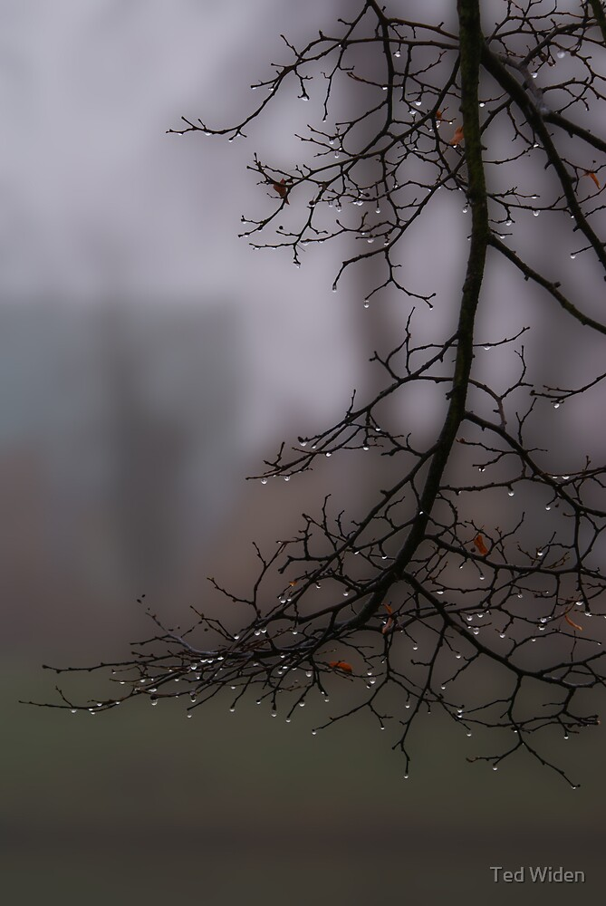 Weeping in the mist by Ted Widen