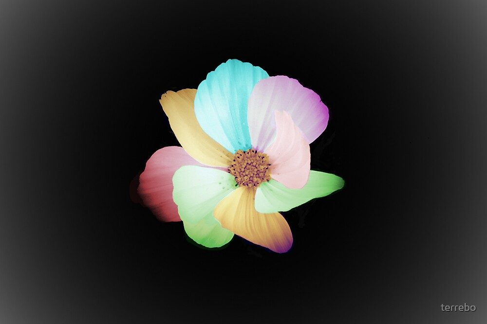 Colors Flower by terrebo