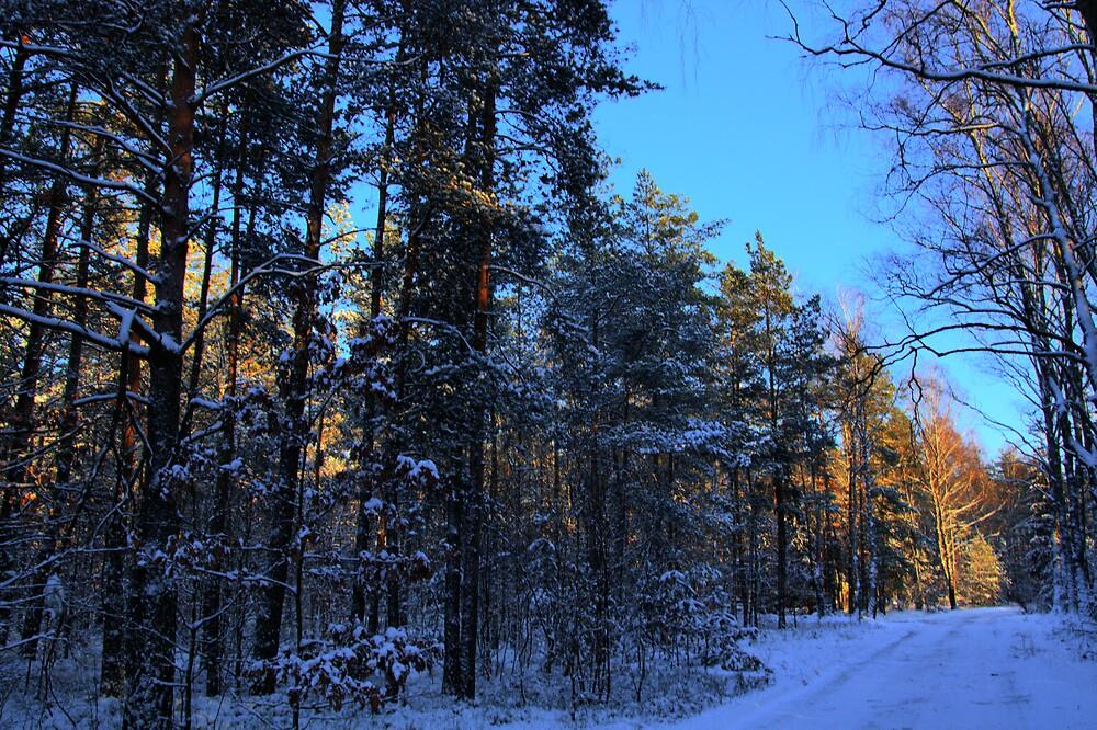 Winter in the woods by Gaz Gazmajster