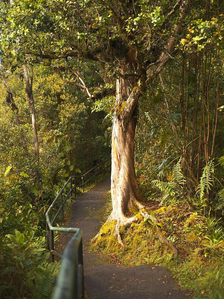 Nature Path by Metrius