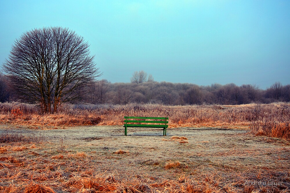 Empty Bench in Clearing by Andrew Cryer