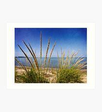 Sheldon Marsh Coastal Plants Art Print