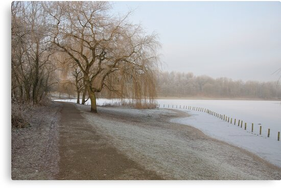 Weeping Willow Over Frozen Lake by Andrew Cryer