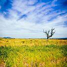 Bare tree in field by Silvia Ganora