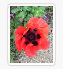 Oriental poppy Sticker