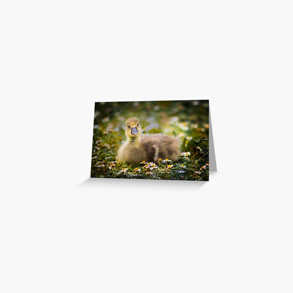 the quizzical gosling Greeting Card