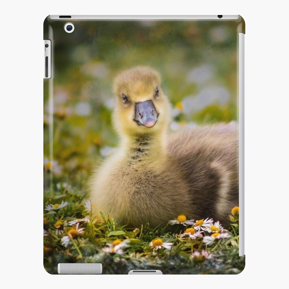 the quizzical gosling iPad Case & Skin