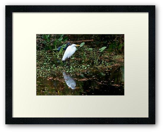 Heron friends by ♥⊱ B. Randi Bailey