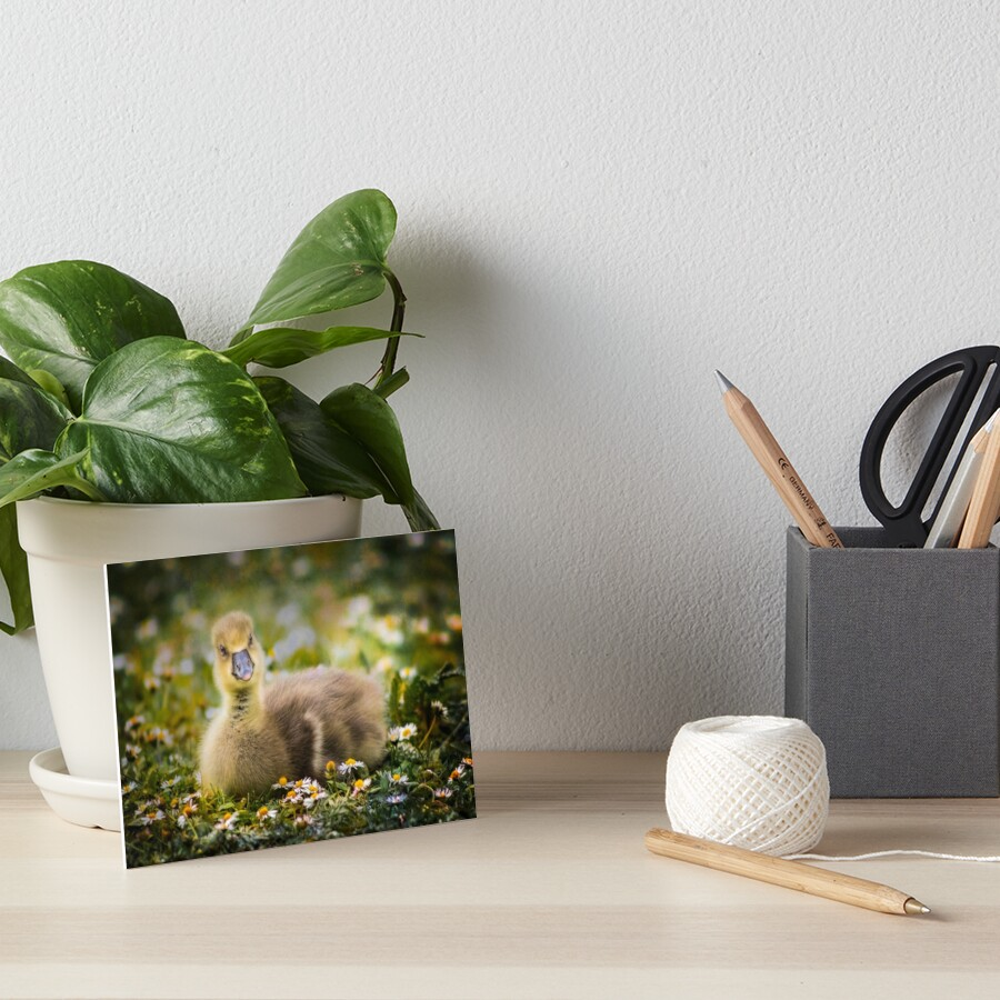 the quizzical gosling Art Board Print