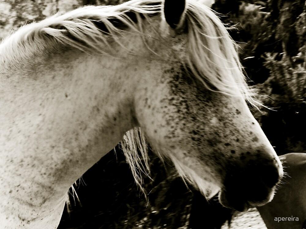 Horse by apereira